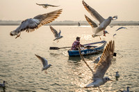 Boy and gulls on Ganges River in Varanasi, India